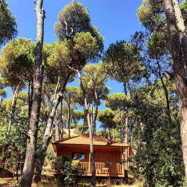 Unplug and unwind among these majestic sceneries of Bkassine's Pine Forest�