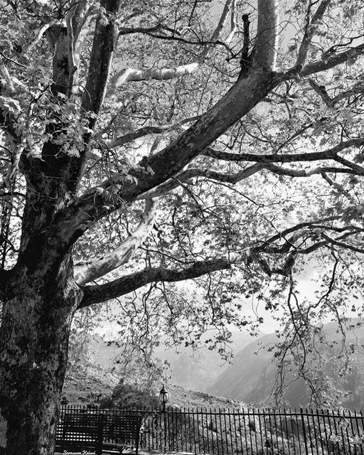 blackandwhite  monochrome  landscapephotography  beautiful  tree...