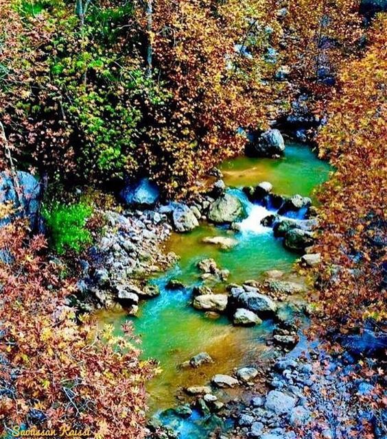 autumn  autumnleaves  trees  landscapephotography  river  colors ...