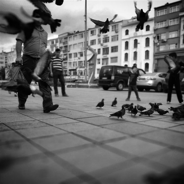 Like a bird in the city -  ichalhoub in  Istanbul  Turkey shooting with a...