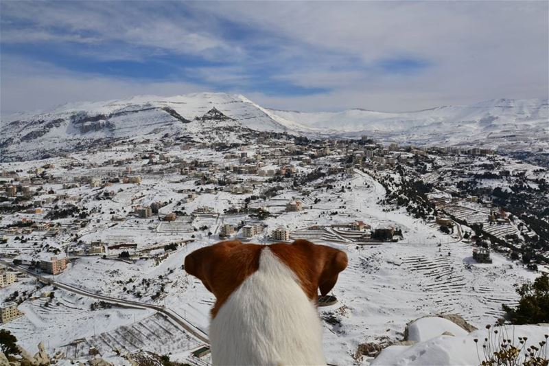 You've met Enzo the Husky, now it's time to meet Peanut the Jack Russell..... (Ehden, Lebanon)