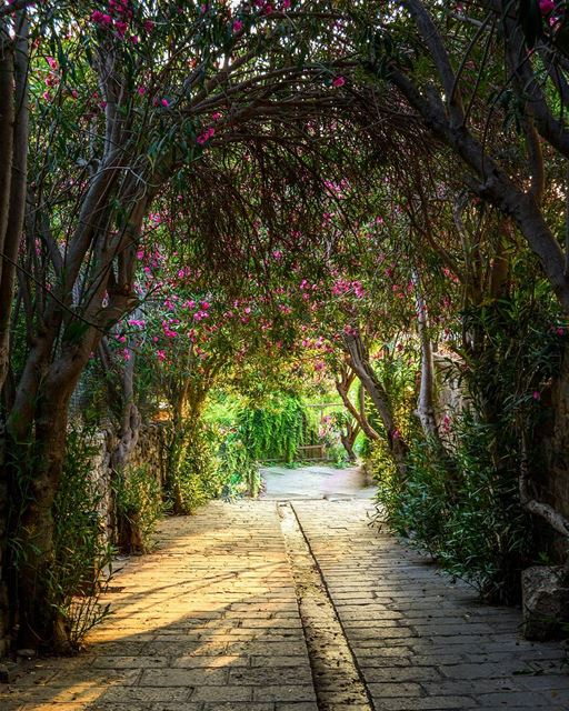 .The green tunnel, Byblos, Lebanon  LiveLoveByblos ... proudlylebanese... (Byblos, Lebanon)