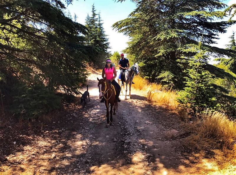 Saddle up and go horses  horsebackriding  outdooractivities ... (Al Shouf Cedar Nature Reserve)