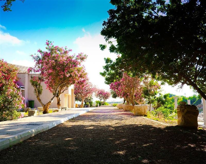 Cherry blossoms and Roman ruins''''''' xpro2  lebanoninapicture ... (Tyre, Lebanon)