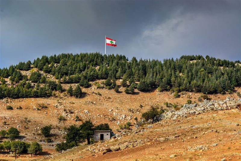 .The unique cedars of Lebanon - skies are preparing for rain. Gray cloudy... (Falougha, Mont-Liban, Lebanon)