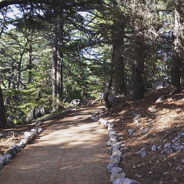 My definition of beautiful ...💚...enjoying every last step I'm taking on... (Al Shouf Cedar Nature Reserve)