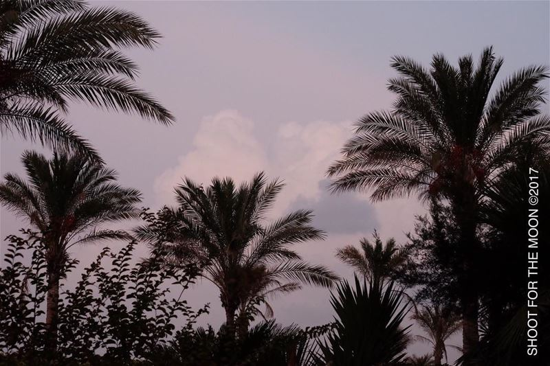 30min before the rain at  sunset  clouds  drawmeaheart  palmtrees ... (Beirut at Manara -zaituna bay)