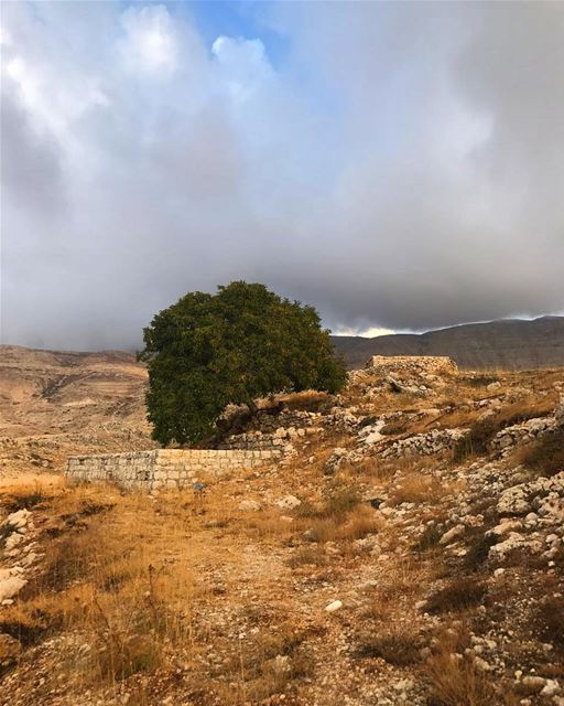 This  lonely  tree will face  winter on its own landscapephotography ... (Bekaa Kafra)