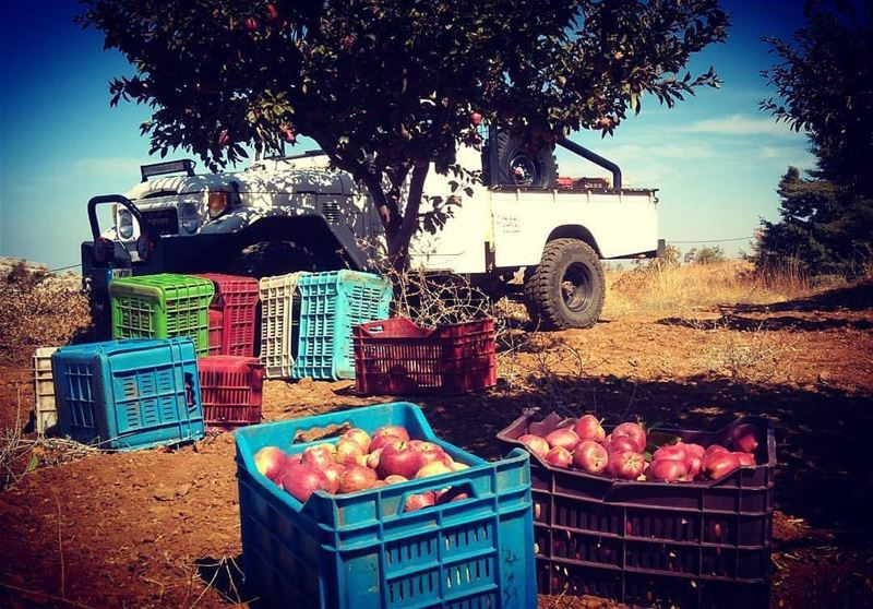 It's time to pick apples 🍎🍏 by @monalisachalhoub livelovebeirut ... (Feghre-douma)