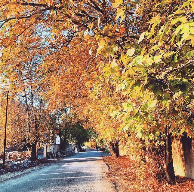 Autumn vibes 🍂 🍁🍄 Morning  leaves  october  colorfull  beauty  live ... (Aley)