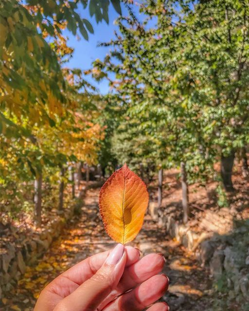 I wish I can be the autumn leaf,Who looked at the sky and lived,And when... (Horsh Ehden)