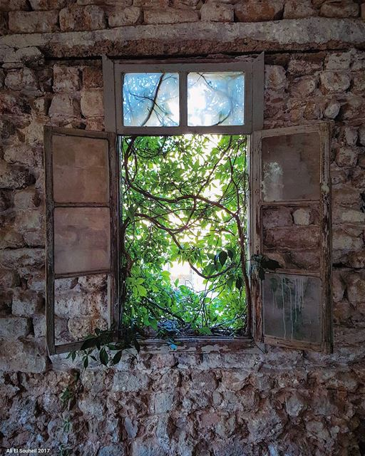 tb  old  window  tree  wall  lebanese  house  lebanon  lebanon_hdr ... (Soûr, Al Janub, Lebanon)