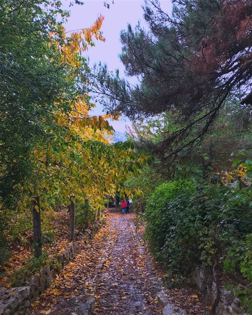 and autumn was... (Horsh Ehden)