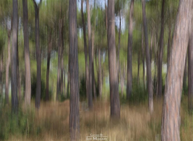 motionblur  longexposure  nophotoshop  blur  trees  forest  nature ...