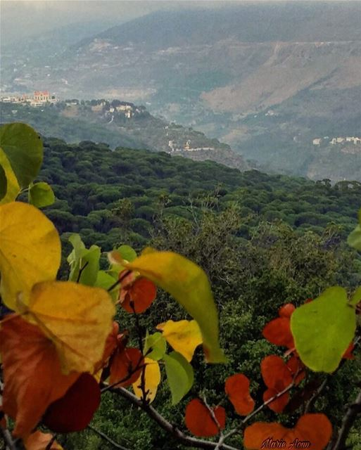 🍂🍁🍂 nature  nature_brilliance  naturelovers  naturephotography ... (Bkâssîne, Al Janub, Lebanon)