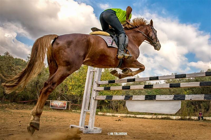 Those who don't jump will never fly... horse  horsebackriding  horsepower... (Al Adham)
