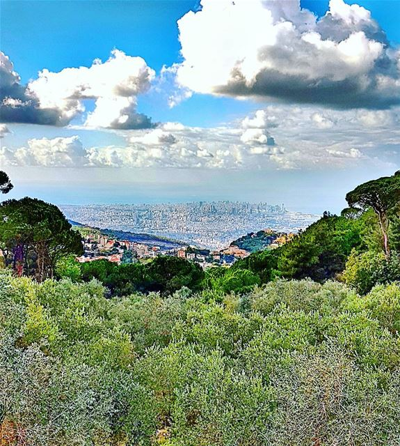 Olive trees and Beirut City  beirut  beirutcity  trees  landscape ... (Mar Chaaya Broumana)