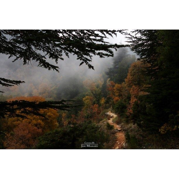 ehden  ehdenreserve  nature  forest  fog  trees  livelovelebanon ...