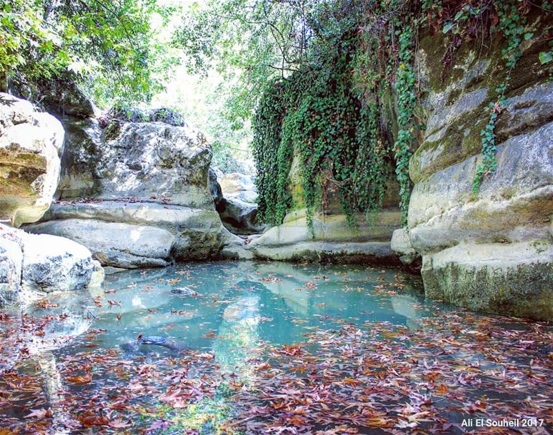 tb  river  baaqlime  mountlebanon  water  leaves  reflection  rocks  ... (Darayah, Mont-Liban, Lebanon)