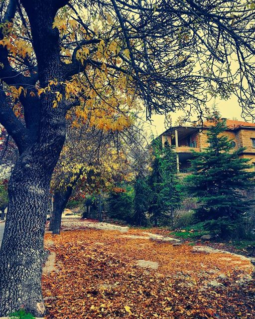 Autumn is the hardest season. The leaves are all falling, and they're... (لبنان كورنيش صوفر)