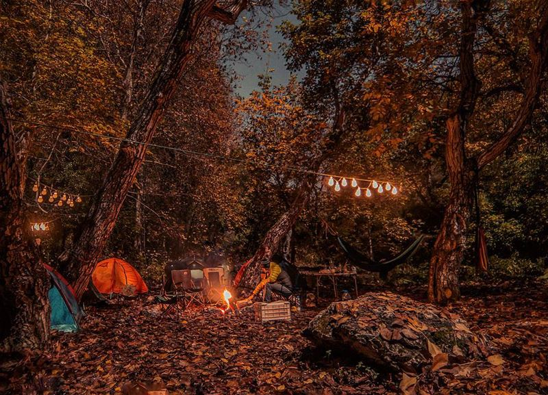 Life is better around the campfire⛺🔥.... camping camp campfire trees...