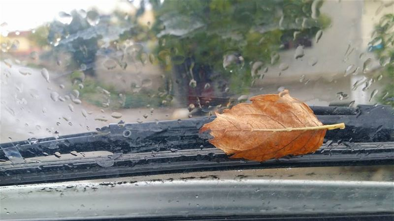 ورقة خريف سقطي قدامو ... autumn  leaf  leaves  nature  rain  lebanon ...