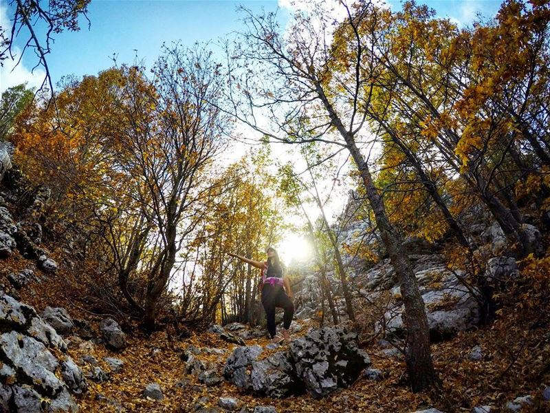 Autumn  Hike  Forest  JabalMoussa  Lebanon livelovelebanon ...