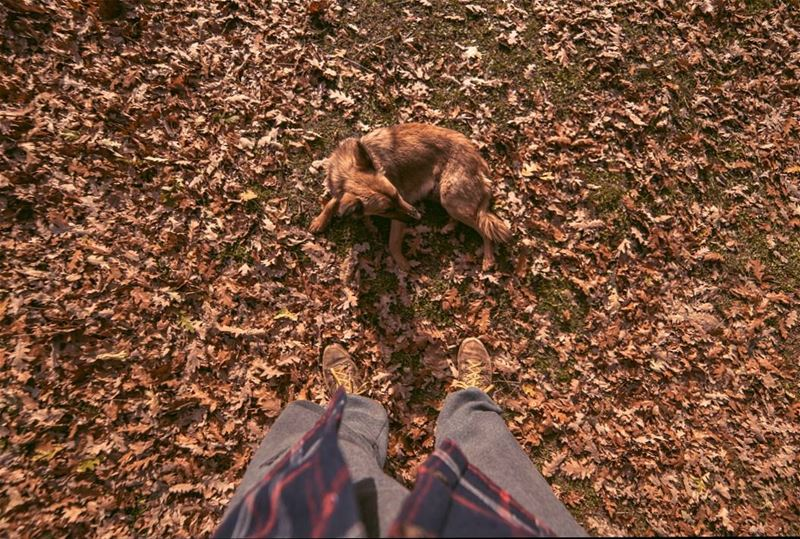 Natural camouflage🍁🍂.... dog dogs autumn hiking camping adventure... (El Qâmoûaa, Mont-Liban, Lebanon)