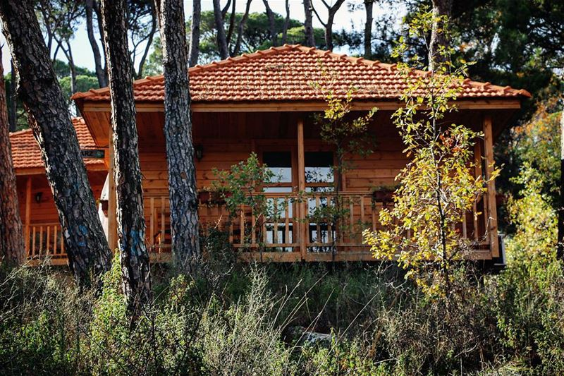 At home with nature 🏡🌳🍂  LaMaisonDeLaForet  Bungalow  Woods  Forest ...