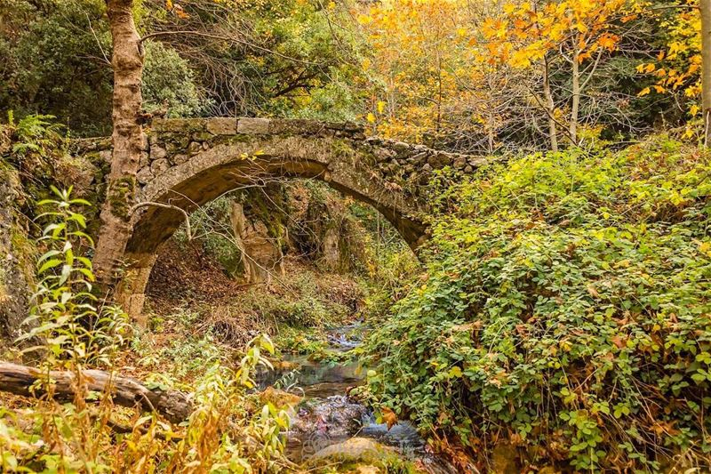 """Love is a bridge between you and everything"" rumi   lebanoninapicture ... (Wadi Qannubin, Liban-Nord, Lebanon)"