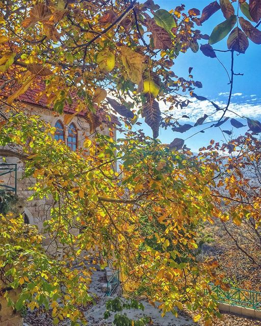 Ehden in autumn shines like a queen wearing her golden leaves crown 🍂👑🍂 (Ehden, Lebanon)