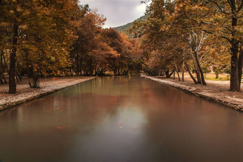 Trees kissed by fire, and a natural olympic pool🍁🍂.... river pool... (Aakar, Liban-Nord, Lebanon)
