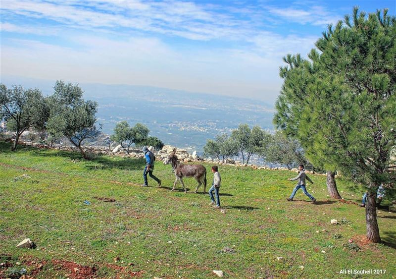 tb  nature  mountains  trees  sky  donkey  northlebanon  kids  green ... (Ouâdi Kfar Habou)