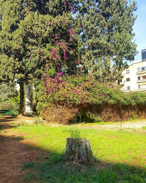 Stump in the city  hiddenbeirut  urbanjungle .................. (National Museum of Beirut)