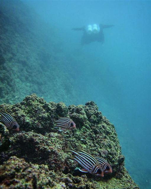 Underwater life -  ichalhoub in  jounieh  Lebanon shooting with a ...