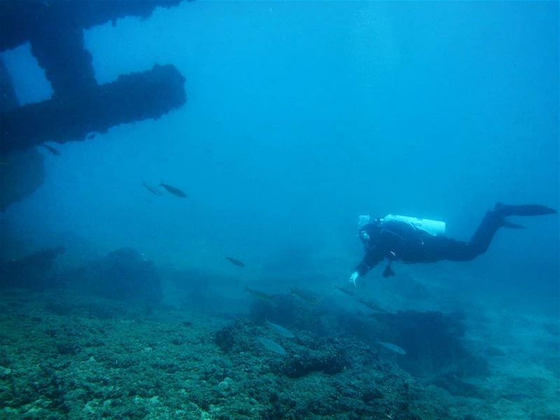 Diver or fish? -  ichalhoub in  jounieh  Lebanon shooting with a ...
