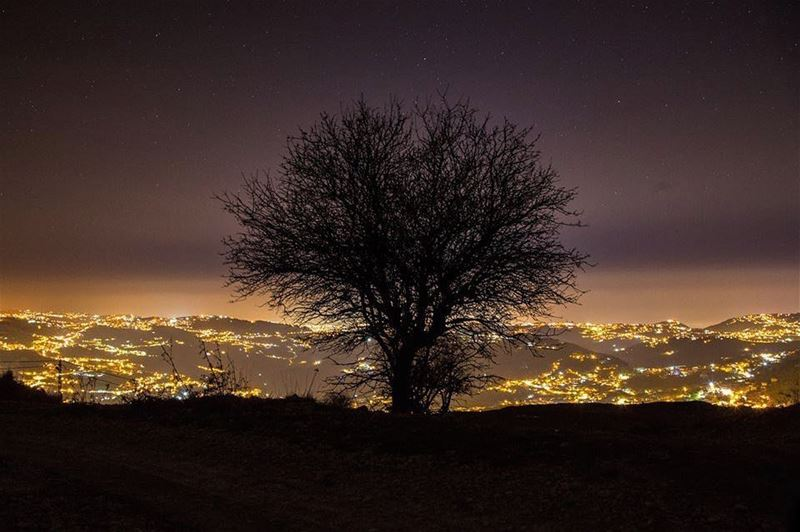 Lonely Nights........ tree  nature  Landscape  winter  sky  stars... (Jabal Fâloûgha)