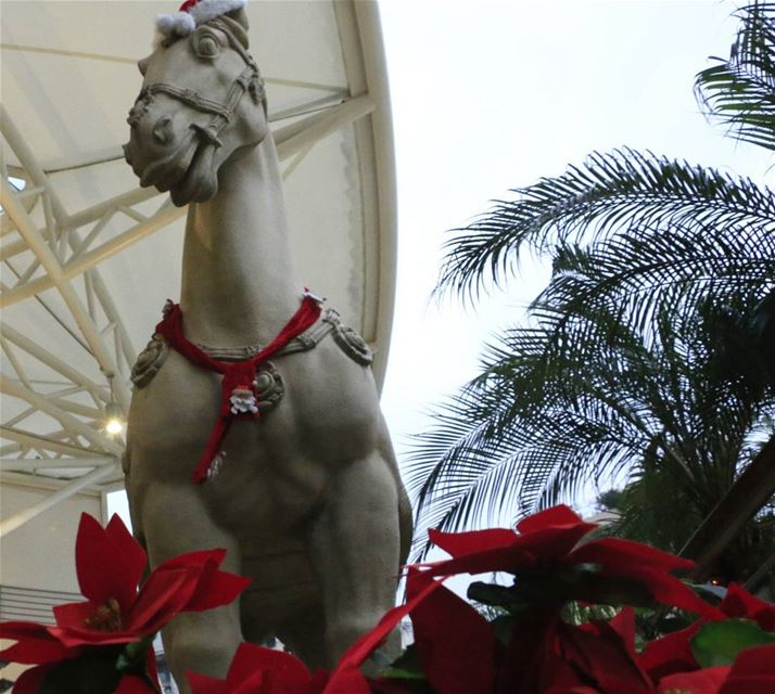 We have a guest for Christmas lunch:) thisislebanon79 ... (Abc Achrafieh)