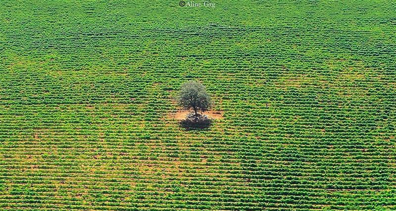 •Different is always Attractive• 🌳 throwback  quote  bedifferent  nature... (West Bekaa)