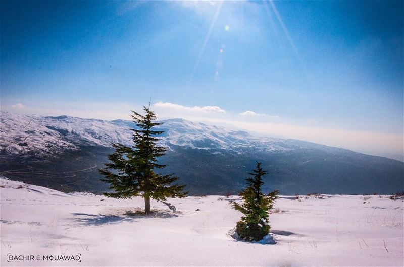 snow  snowshoeing  little  ceders  cedersoflebanon  sunny  sunnyday ...