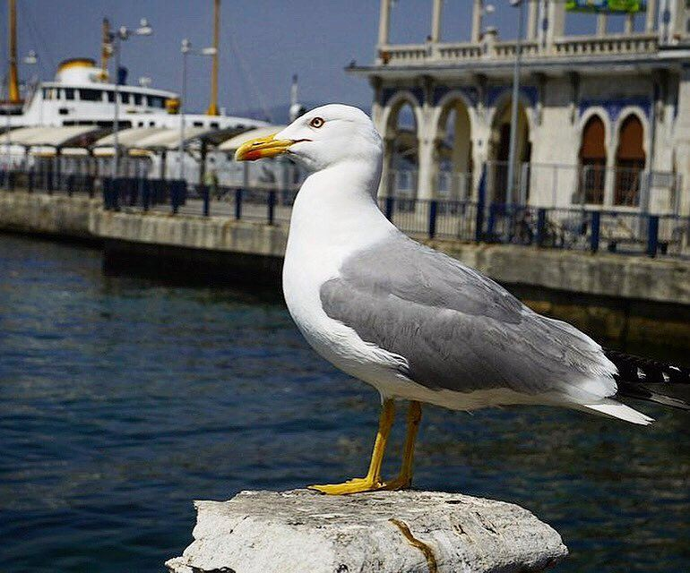 Break Time - Catching Some Sunshine 🦅.📍Turkey | 2013..━ ━ ━ ━ ━ ━ ━ ━ (Princess Island Istambul)
