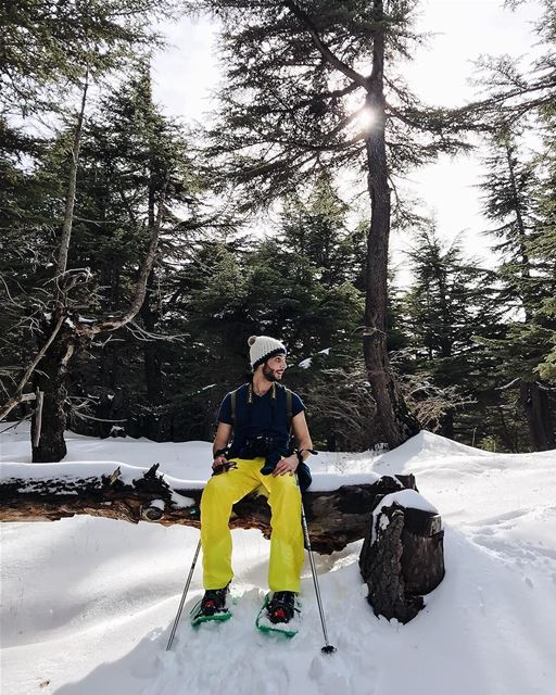 Forest is for rest 🌲❄️-Photo Credit: @nady83- lebanon  north ... (Hadath El-Jubbah, Liban-Nord, Lebanon)