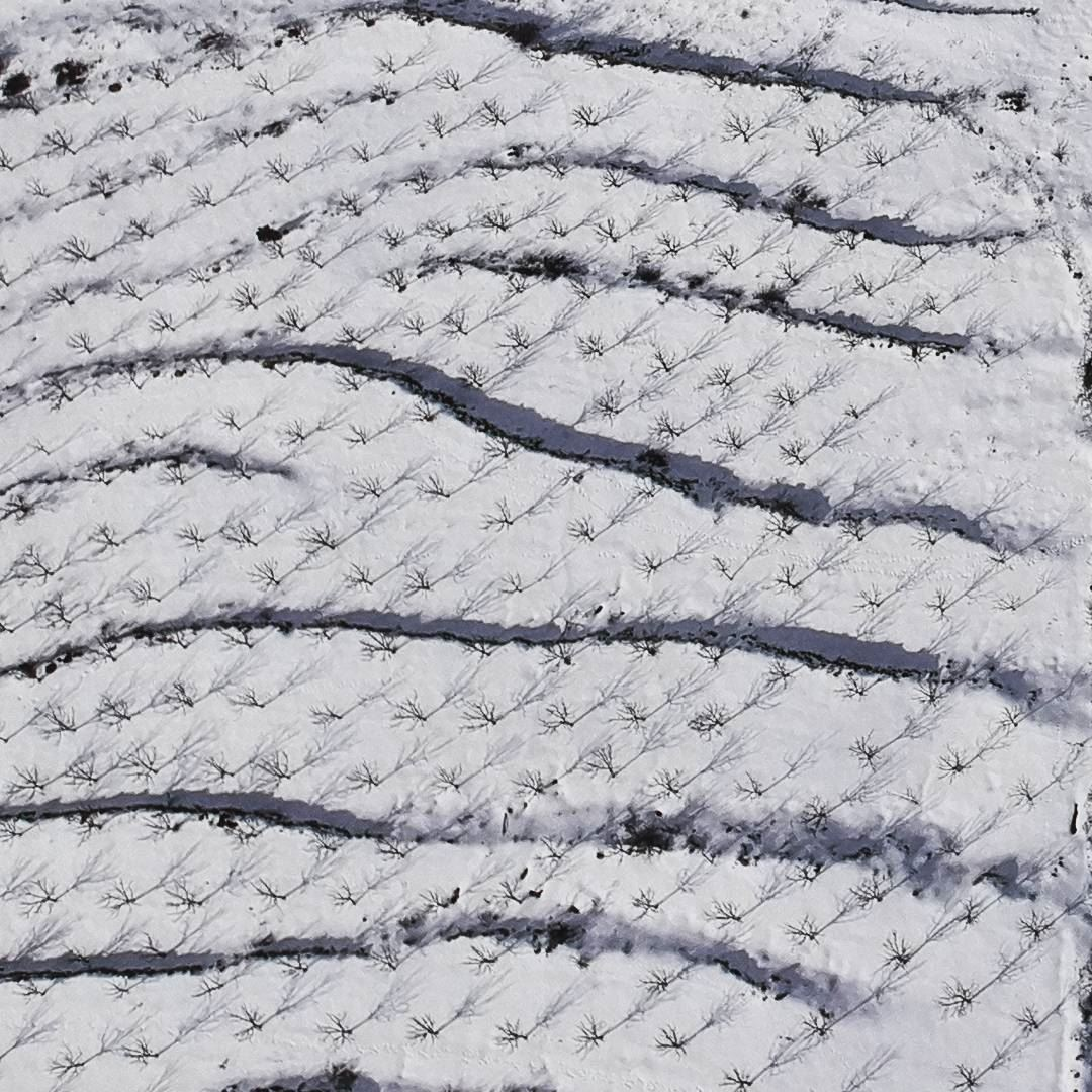 Waves of apple trees snow  apple  viewfromabove  nature  instadaily ... (Arz Nîha)