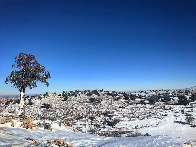Winter time by @lea.hamb Mountain  Hermel  hermel_city  bekaa ... (El Hermel, Béqaa, Lebanon)