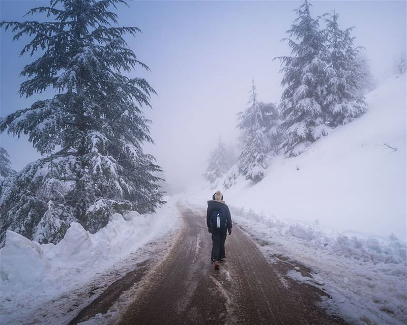 Arriving to Barouk after a snowstorm ... (Arz el Bâroûk)