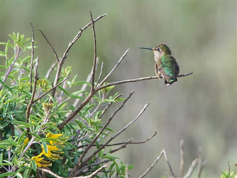 Smallest of the bird Kingdom, meet the  hummingbird...taken in ...