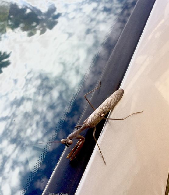 today  car insect  reflection  sky  clouds  trees...