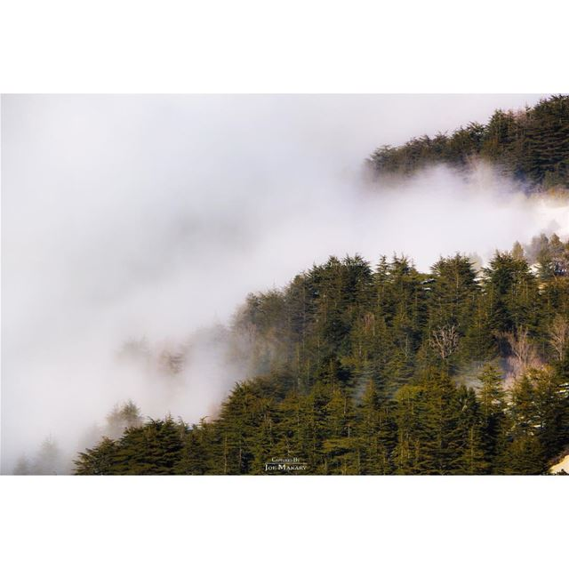ehden  ehdenreserve  nature  naturelovers  snow  fog  trees  clouds ...