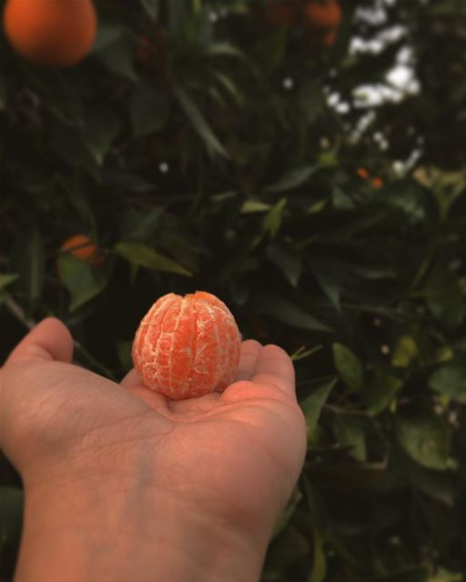 ~..Clementine🍊: .*Hybrid between a mandarin orange & a sweet orange*Deep (Tyre, Lebanon)