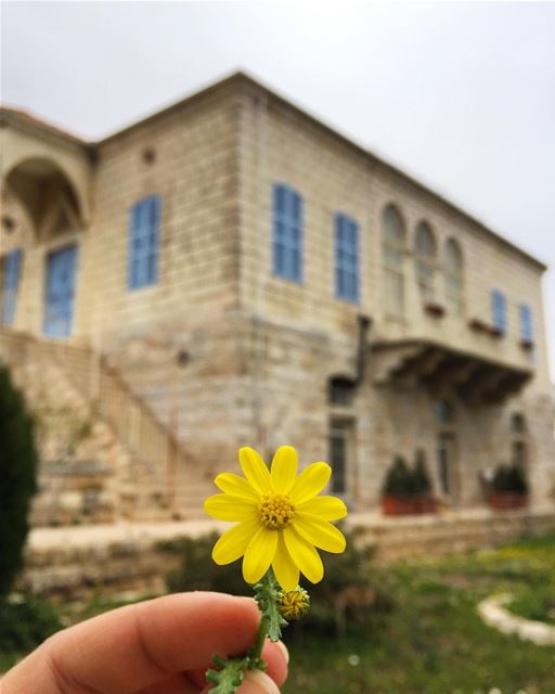Douma, North Lebanon: blossoming beauty.... douma  lebanon  flower ... (Douma, Liban-Nord, Lebanon)